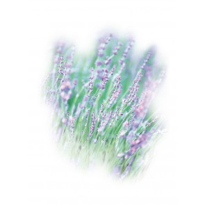 Medisana Aroma lavender 10ML
