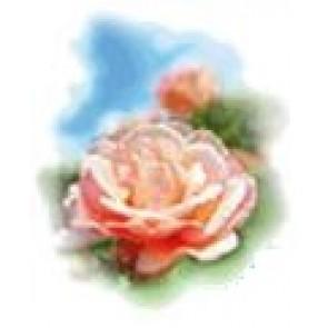 Medisana Aroma vrtnica 10ml